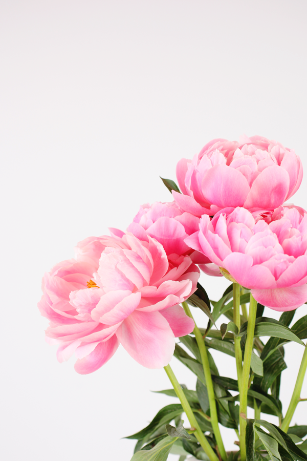 I Have This Thing With Pink - bouquet of pink peonies